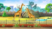 Giraffes in a Zoo waiting for a Children. Handmade animated  motion graphic.