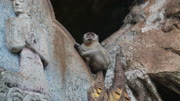 Monkey on carved rock buddhist temple