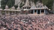 Pigeons flying flock city eating