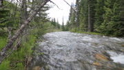 River stream forest tracking shot